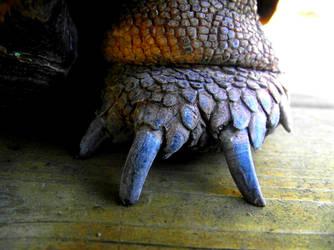 Clawy feet by Miss-blyss
