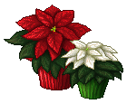 F2U Poinsettias by Alystem