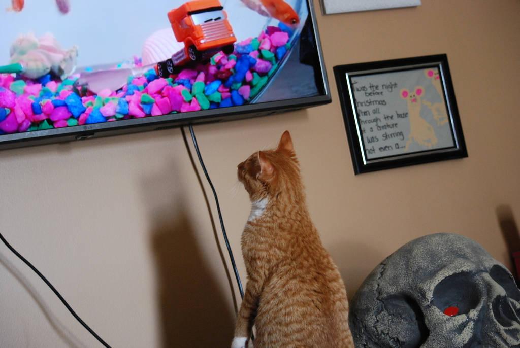 Watching the Fish by KalikaMarie