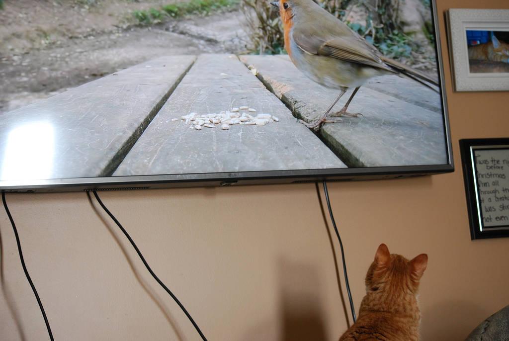 Ohhh...I love birds by KalikaMarie