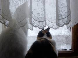 kedilerim by MeralSarioglu