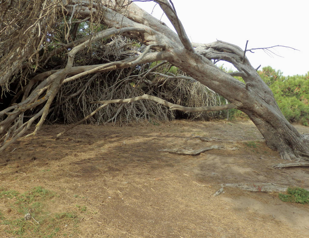 Under the Fallen Tree by kitszl17