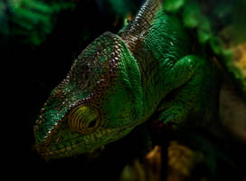Chameleon in Green by bulgphoto