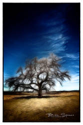 The Mighty Oak by o0oLUXo0o