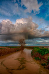 Muddy Water by o0oLUXo0o