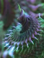 Macrospiral by fragmentNull