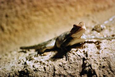 Dragon lizard by bianco-c