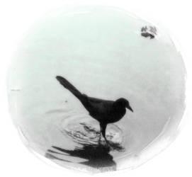 circle of calm by aliecatrose