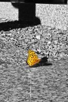 Graveyard Butterfly by Strikethecamera
