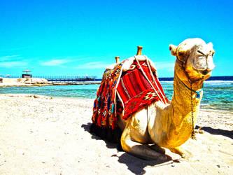 Camel HDR by mottl