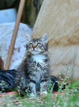 French Cat  numero deux by Real-Neil