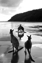 Kangaroos at Sunrise by vickychica