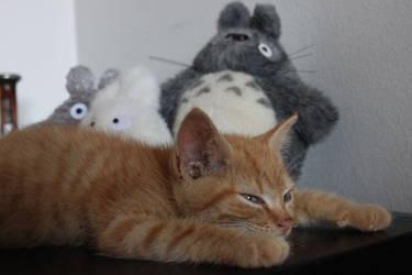 Kitten Catbus by a-moosed