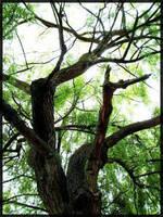 Trees by DarkOiran