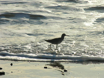 Sandpiper C by Be-Mary