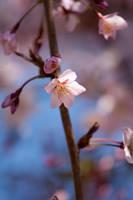 Flower by MalinQuist