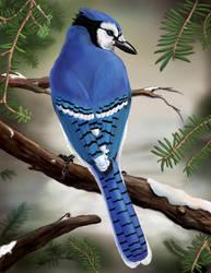 Blue Jay by Aaron-con-pollo