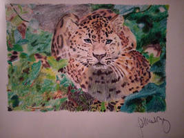 colored pencil leopard by StarsTempestuous