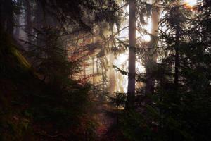 Lightwind by Yesterdawn