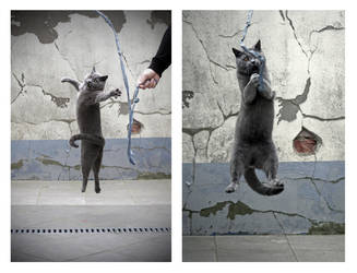 Jumping - double by Rima-Deer