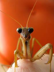 Mantis by LefseNinja