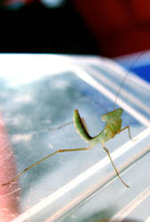Baby Mantis 2 by LefseNinja