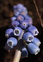 blue wonder by marob0501