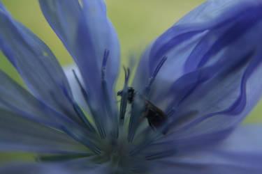Shy fly by Kartumandurix