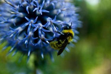 Honey Bee by Kartumandurix
