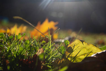 Autumn by Kartumandurix