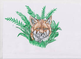 Fox and Ferns by ArcticIceWolf
