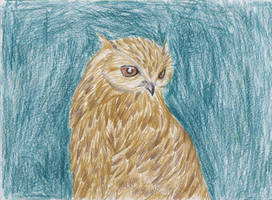 Eagleowl by ArcticIceWolf
