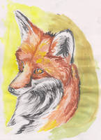 Watercolor Red Fox by ArcticIceWolf