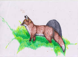 Fox in the meadow by ArcticIceWolf