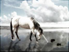 Unicorn by xxhera