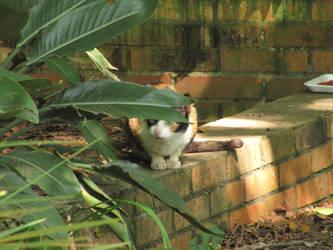 Stalking cat by Calcobrinus
