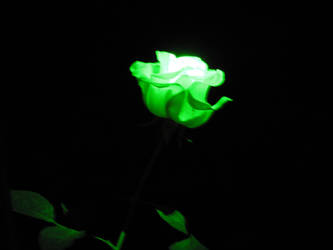 Radioactive Rose by Calcobrinus