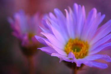 Blue Flower in the Canyon by SergeiDJW