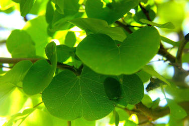 Gentle Green Leaf by SergeiDJW