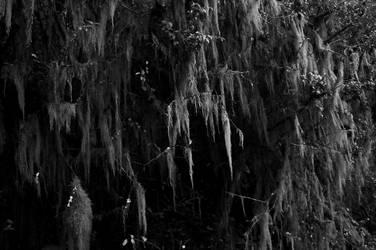 Sad Moss by SergeiDJW
