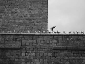 gull's meeting by lorygol