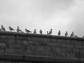 gull's meeting 2 by lorygol