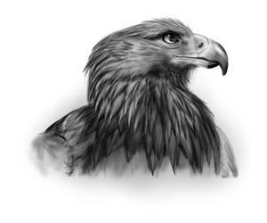 Hawk by pschosilver