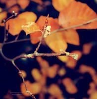 B R A N C H by moninyok