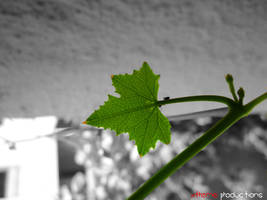 Sin City Leaf by CompBomb
