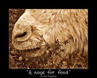 A nose for food by koltregaskes