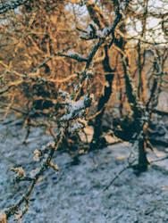 Winter warm by koltregaskes