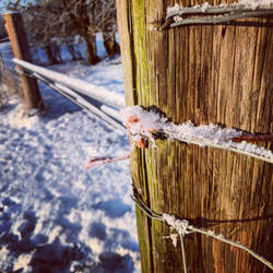 Snowy fence by koltregaskes