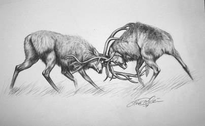 Red Deer by Midnight-Sun-Art