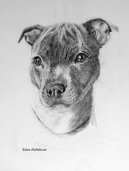 Stafford Puppy by Midnight-Sun-Art